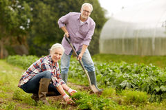 Senior couple working in garden or at summer farm Royalty Free Stock Images