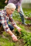 Senior couple working in garden or at summer farm Stock Photos