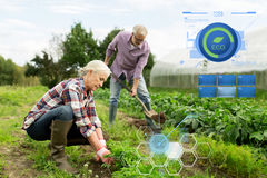 Senior couple working in garden or at summer farm Stock Image