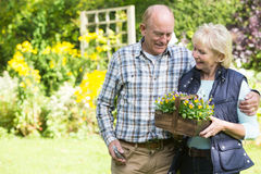 Senior Couple Working In Garden Together Royalty Free Stock Image