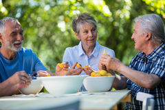 Senior couples removing seeds of apricot fruits in garden Royalty Free Stock Photo