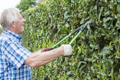 Senior cut hedge garden Stock Images