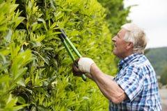Senior cut hedge garden Royalty Free Stock Photos