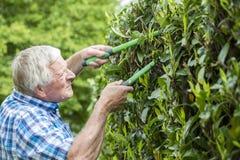 Senior cut hedge garden Stock Photos