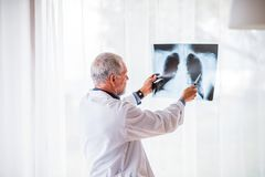 Senior doctor looking at chest x-ray in office. Royalty Free Stock Photo