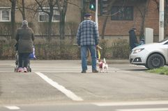 Dog crossing the street. Senior with a dog crossing the street Stock Photos