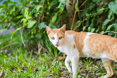 Senior domestic cat on green natural background. Stock Photo