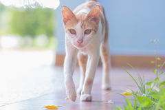 Senior domestic cat on green natural background. Stock Images
