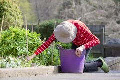 Senior elderly person active lifestyle in garden during bright colourful spring sunshine and summer temperature. Uk royalty free stock photography