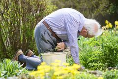 Senior elderly person active lifestyle in garden during bright colourful spring sunshine and summer temperature royalty free stock photography