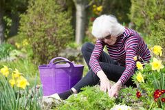 Senior elderly person active lifestyle in garden during bright colourful spring sunshine and summer temperature royalty free stock photo