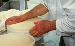 Senior expert cheesemaker checks he wheel of cheese just made in Royalty Free Stock Photos