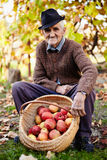 Senior farmer with apples Stock Photo