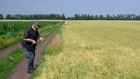 Senior farmer examines agricultural fields at summer day stock footage