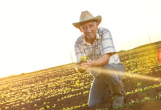 Senior farmer in a field Stock Photography