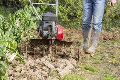 Senior farmer gardener working in the garden with rototiller , tiller tractor, cutivator, miiling machine. Permaculture royalty free stock photography