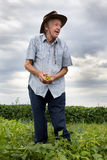 Senior farmer holding yellow beans Royalty Free Stock Photos