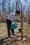 Senior farmer planting a plum tree Royalty Free Stock Image
