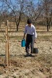 Senior farmer planting a plum tree Stock Photo