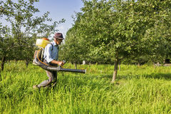 Senior farmer spraying the orchard Royalty Free Stock Image