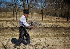 Senior farmer spring cleaning the orchard Royalty Free Stock Images