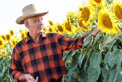 Senior farmer standing in a field royalty free stock images