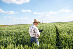 Senior farmer. Farmer standing in a wheat field and looking at tablet Royalty Free Stock Photos