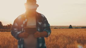 Senior farmer standing in a wheat field with a tablet. Male agronomist farmer with digital tablet computer in wheat. Field using apps and internet in stock video footage