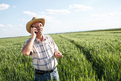 Senior farmer. Farmer standing in a wheat field and talking on phone Stock Image