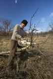 Senior farmer trimming trees Stock Photo