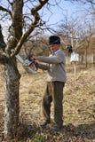 Senior farmer trimming trees Stock Images