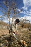 Senior farmer trimming trees Royalty Free Stock Photo