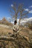 Senior farmer trimming trees Stock Image