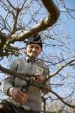 Senior farmer trimming trees Stock Photography