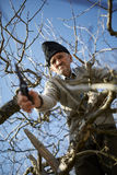 Senior farmer trimming trees Stock Photos