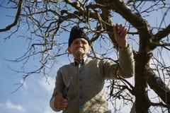 Senior farmer trimming trees Royalty Free Stock Image