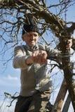 Senior farmer trimming trees Royalty Free Stock Images