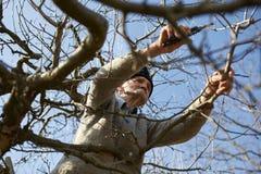 Senior farmer trimming trees Royalty Free Stock Photography