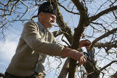 Senior farmer trimming trees Royalty Free Stock Photos