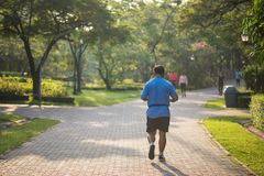 Senior fat man run in park. Senior old fat man running or jogging in park at sunrise with natural background. Elderly guy exercise or work out. Sport and health royalty free stock photography