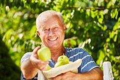 Senior feeling joy because of the harvest season royalty free stock photography