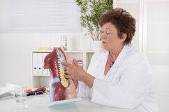 Senior female doctor explaining the human body with torso. Here spinal column royalty free stock image