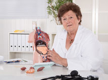 Senior female doctor explaining the human body with torso. Sitting in the office stock photography