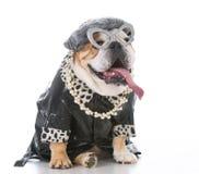 Senior female dog Stock Photos