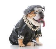 Senior female dog Stock Photo