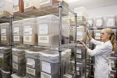 Senior female employee in spice storage room stock images