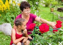 Senior female gardener and her small grandaughter sitting near the garden roses bush. Senior female gardener and her small granddaughter sitting near the garden royalty free stock photo