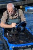 Senior fishermen in fish farm. Senior fishermen in a fish farm Royalty Free Stock Photos