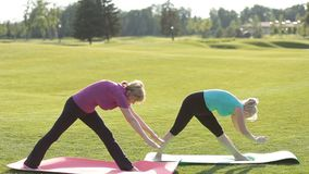 Senior fit women practicing yoga in the park stock footage