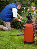 Senior  florist working in the garden. Senior man florist working in the garden Royalty Free Stock Photography